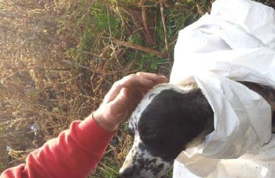 il cane tratto in salvo