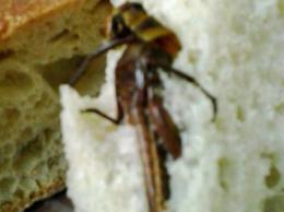 Cavalletta morta trovata da una donna nel pane comprato in negozio