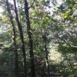 foresta6