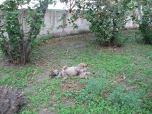Uno dei cani avvelenati