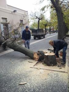 albero_pericolante_avella
