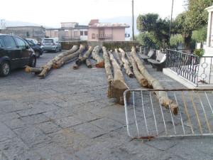 Gli alberi sequestrati a Mugnano