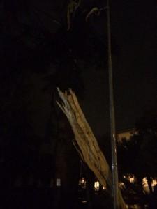 L'albero squarciato dal fulmine (foto F.Ferrara)