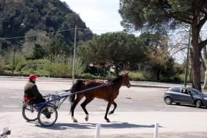 Scommesse cavalli Agnano