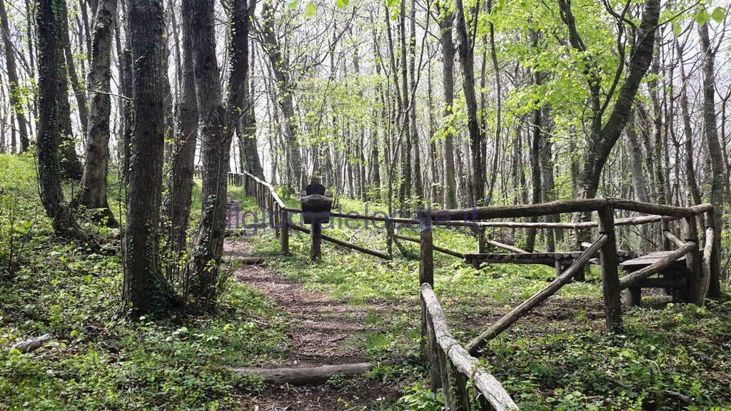 Ferragosto apertura straordinaria della foresta di for Pianta della foresta di pioppo