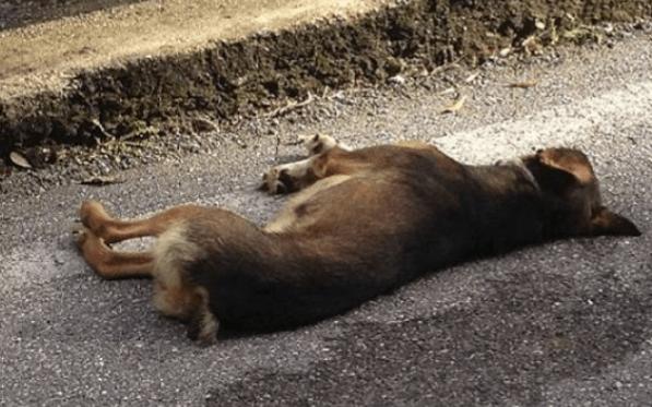 Tufino, branco di randagi aggredisce padrone e uccide a morsi il suo cane