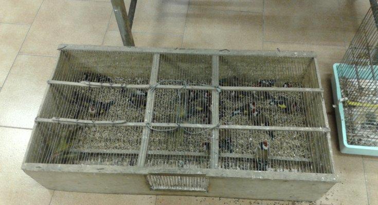 Uccellagione, maltrattamento di animali e richiami fuorilegge: tre denunciati
