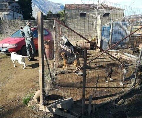 San Felice a Cancello, scoperto canile abusivo: denunciato 42enne